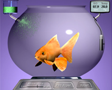 Fish Experiment Thumbnail